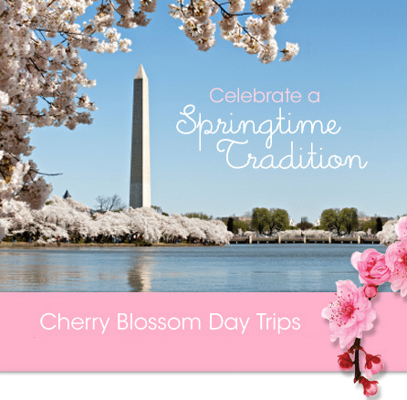 Cherry Blossoms trip