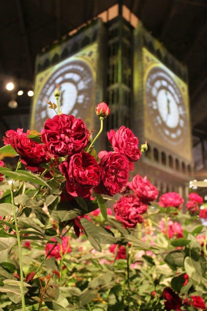 Big Ben Roses