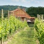 Winery 32 vineyard